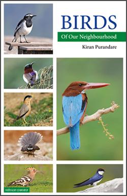 Birds of our Neighbourhood