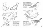 htd-birds-eng-1.jpg