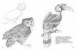 htd-birds-eng-2.jpg